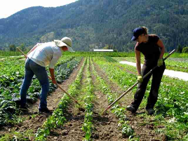 Employment Japan Needs 20 Farmers Worker