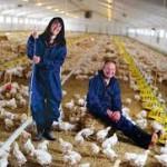 Japan Poultry Farmers